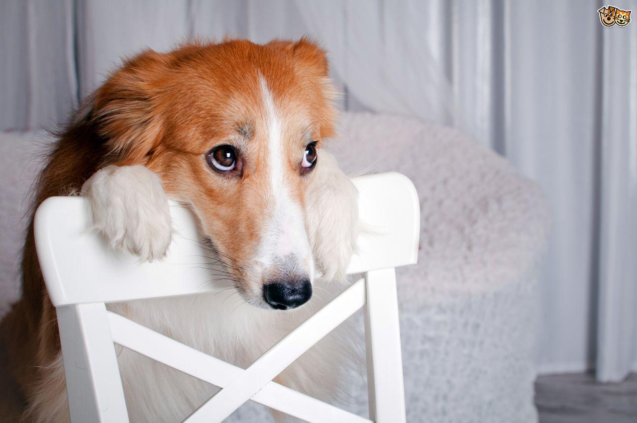 ΒΙΟΙ ΠΑΡΑΛΛΗΛΟΙ To διεφθαρμένο ελληνικό δημόσιο και η Μαφία των σκύλων στην Ρουμανία!
